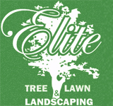 Tree Service Delaware | DE | Lewes | Milford |Rehoboth | Georgetown | Trees