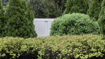 Hedges, hedging, bushes, bush removal, shrub removal, lewes, milford, rehoboth, delaware